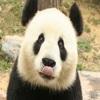 PandaP123
