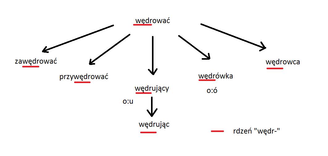 Utwórz rodzinę wyrazów do słowa wędrować. Podkreśl rdzeń i wypisz  oboczności. - Brainly.pl