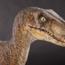 raptor3344