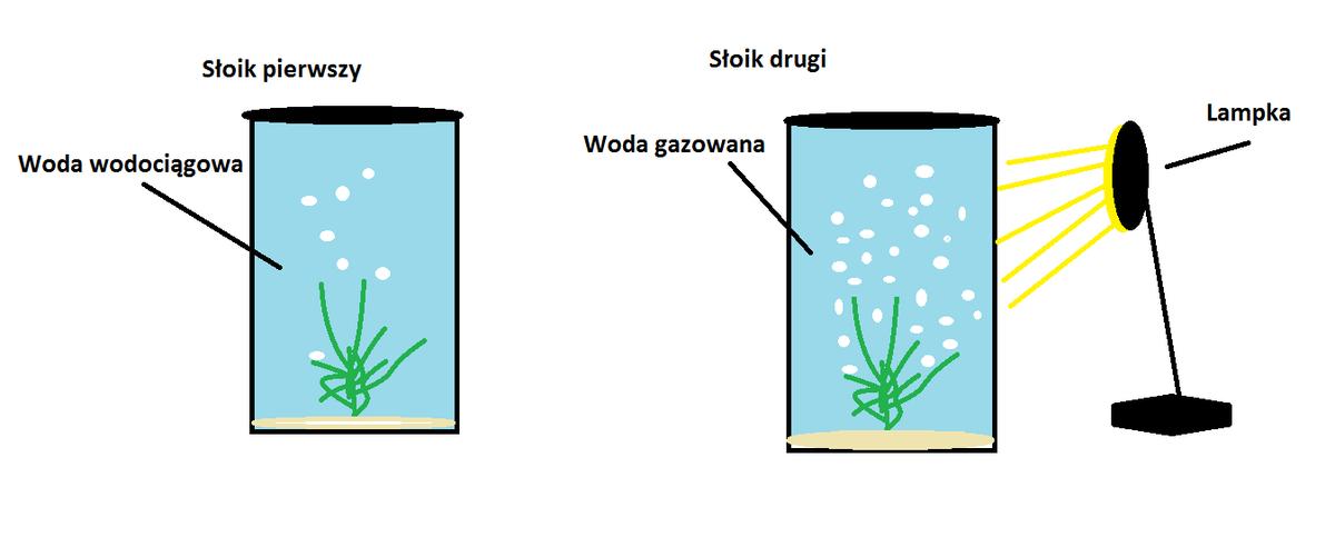 czy fotosynteza jest procesem anabolicznym
