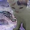 KittySweet123