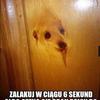 szpuni