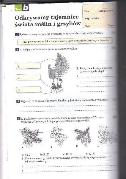 testy biologia klasa 5 protisty i grzyby