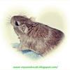 myszoskoczek1