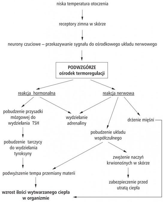 W Jaki Spos 243 B Wsp 243 łdzialaja Układy Nerwowy I Hormonalny
