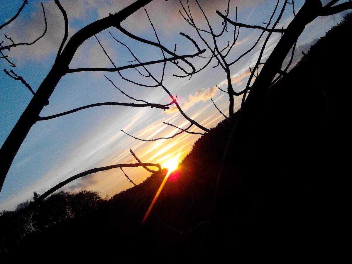 Napisz Wierszyk Rymowany O Lesie C Mam Nadzieję że