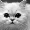 Kotełek54231
